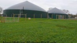 Dairy-Farmers-Consider-Selling-Herds-and-Going-for-Biogas