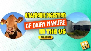 """Image text: """"Anaerobic Digestion of US Dairy manure""""."""