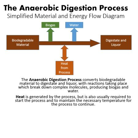 process essay digestion The food digestion process essay digestion in the mouth: food is mechanically cut by incisors and canines, chewed by molars and premolars, and mixed with saliva by the tongue the saliva has been produced by salivary glands, which pour it into the mouth through salivary ducts.