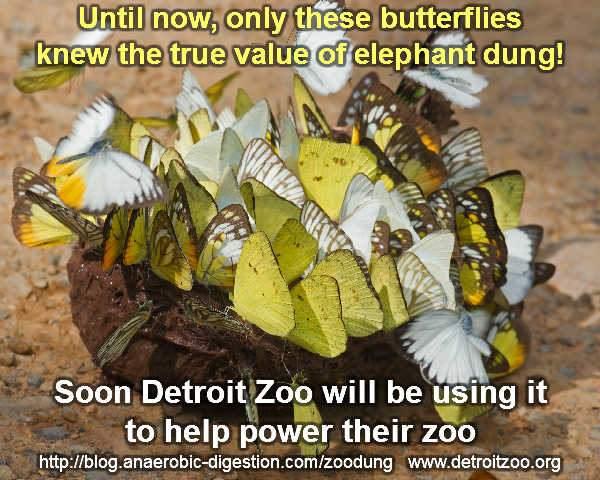 Meme which explains Detroit Zoo biogas from elephant crap