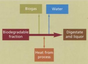 Anaerobic digestion schematic