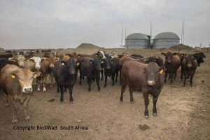 Image illustrates Anaerobic Digestion in South Africa.