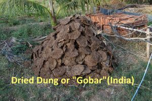Image shows dried gobar in a pile