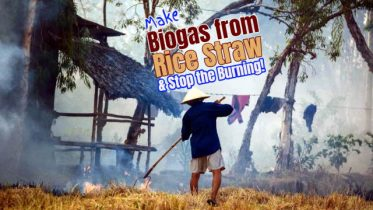 Rice straw and biogas article featured image.